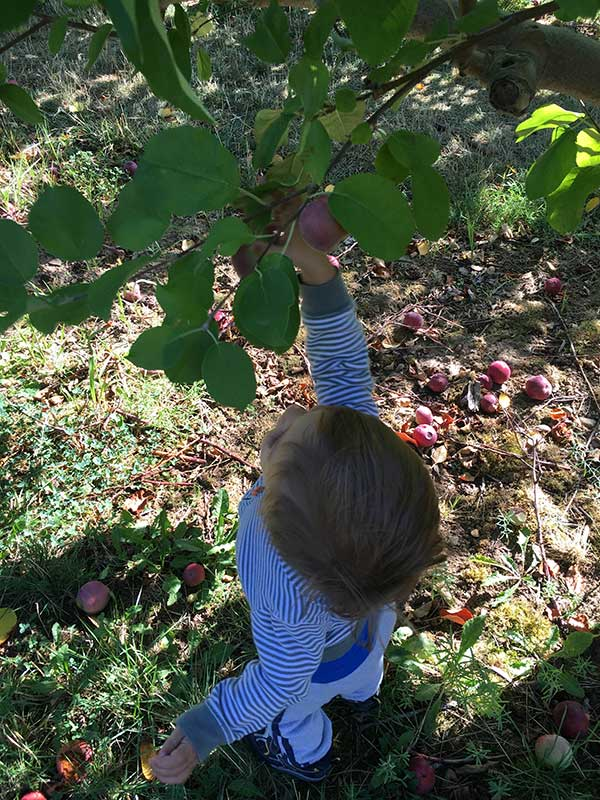 Matt picking apples. (provided by Joy Auch)