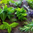 Sage Advice: 7 Tips for Your Herb Garden (Recipes Included!)